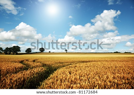 Golden summer landscape, wheat farm field with blue sky and cloudscape