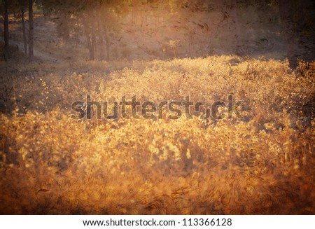 golden sun rays at meadow in grunge and retro style