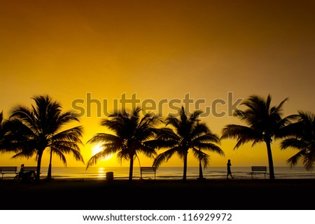 golden sunrise and silhouette palm tree