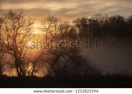 Stock Photo Golden sunrise through trees and over a mist covered lake with water fowl in the water.