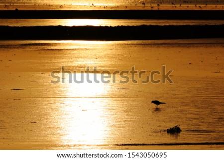 Golden sunset at Wadden Sea (North Sea)