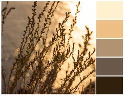 Golden sunset colour palette.  Warm color swatch.