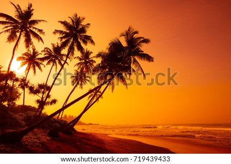 Golden sunset on tropical beach with coconut palm trees silhouettes #719439433