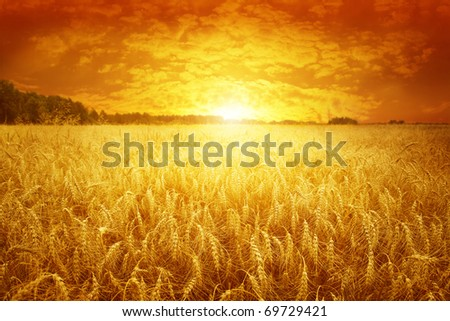 Golden sunset over wheat field. #69729421