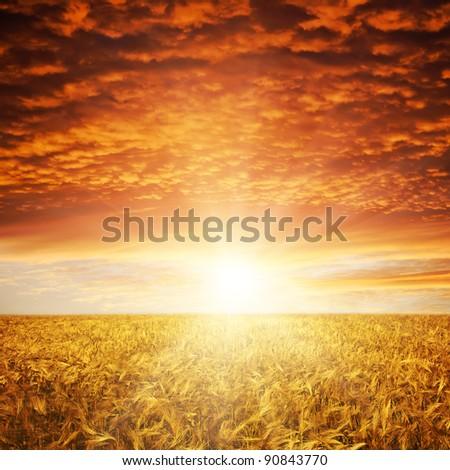 golden sunset over wheat field #90843770