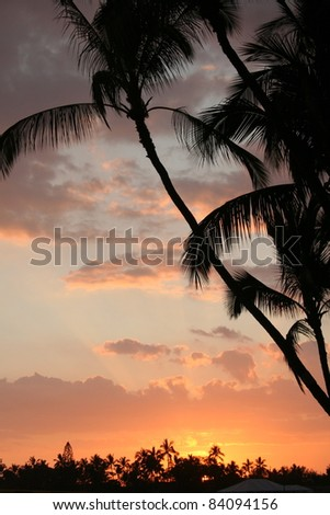 Golden Sunset with Palms