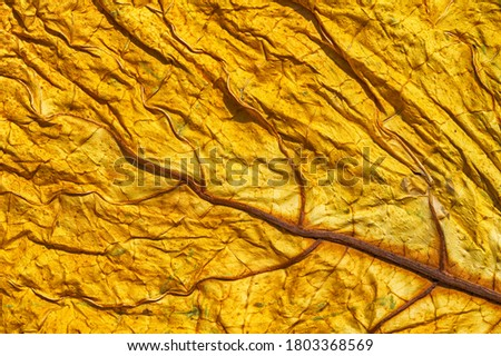 Golden tobacco leaf texture. Dried tobacco leaf with visible details of the structure. Abstract macro shot of tobacco leaf Stock fotó ©