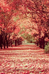 golden tree alley with falling leaves, autumn landscape,  natural background