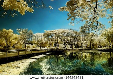 Golden tree garden beside lake and bridge