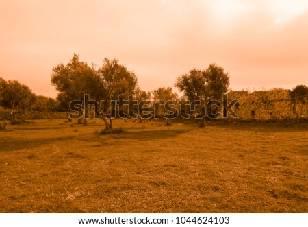 Golden view of the ruins of Side #1044624103