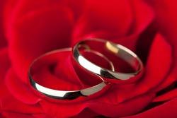 Golden wedding rings over red rose
