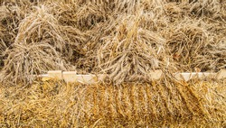 Golden wheat ears and dry hay, background, harvest, autumn