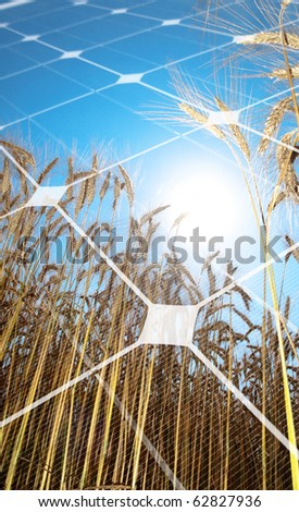 Golden wheat  field against the sun with photovoltaic panel