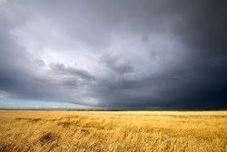 golden wheat field and dark cloudy sky