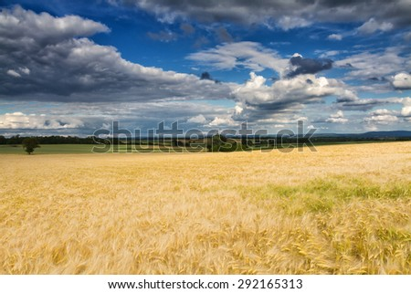 Golden wheat field under a partly cloudy sky, Wetterau, Hessen, Germany #292165313