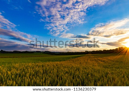 Golden wheat field under the blue sky with dramatic clounds at the sunset, summertime in Black Forest, South Germany #1136230379
