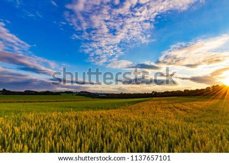 Golden wheat field under the blue sky with dramatic clounds at the sunset, summertime in Black Forest, South Germany #1137657101