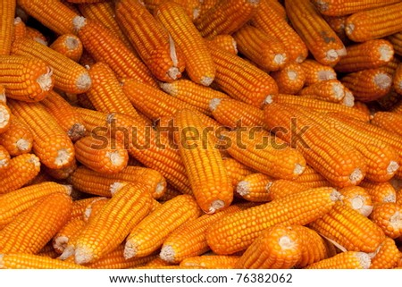 Golden Yellow Dried Corn