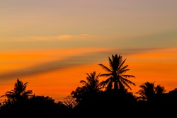 Goldenhour against the foreground of a coconut tree
