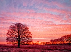 Goldenhour sunrise with beech tree Edese Hei