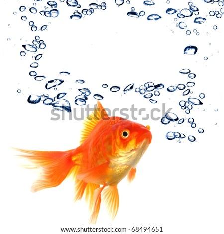 goldfish an water bubbles with blank and empty copyspace