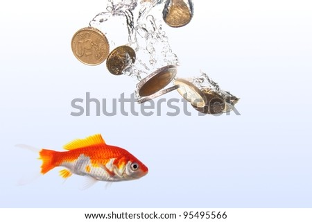 goldfish and euro money showing finance or investment concept
