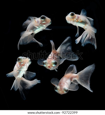 goldfish collection on black background