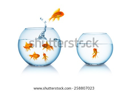 goldfish escapes in a fishbowl with his friend stock photo