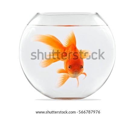 Shutterstock Goldfish floating in glass sphere and on a white background