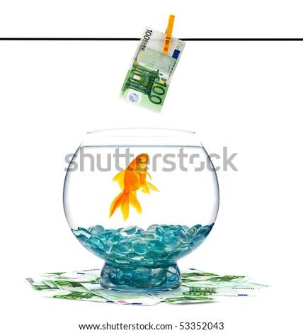Goldfish in aquarium on a white background