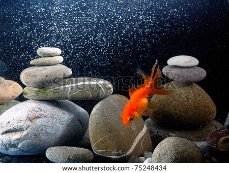 goldfish in aquarium over well-arranged zen stone and nice bokeh of bubbles