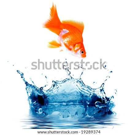 Goldfish is jumping out of the water