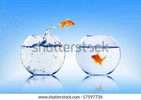 Goldfish jump into the aquarium with water. stock photo
