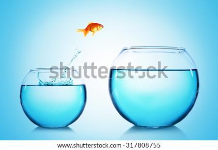 Goldfish jumping from glass aquarium,on blue background stock photo