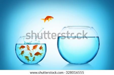 Goldfish jumping from glass aquarium, on blue background stock photo