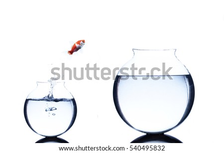 goldfish jumping from small to bigger bowl isolated on white background stock photo