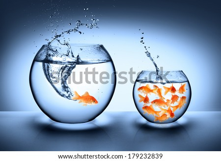 Shutterstock goldfish jumping - improvement concept