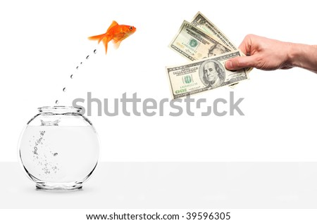 goldfish jumping out of fishbowl lured by money isolated on white