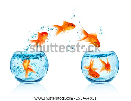 Free Photos Gold Fish Jumping Out Of Water In Fishbowl Avopix Com