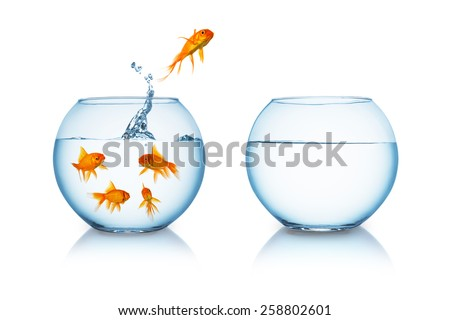Shutterstock goldfish jumps in to a fishbowl in to liberty