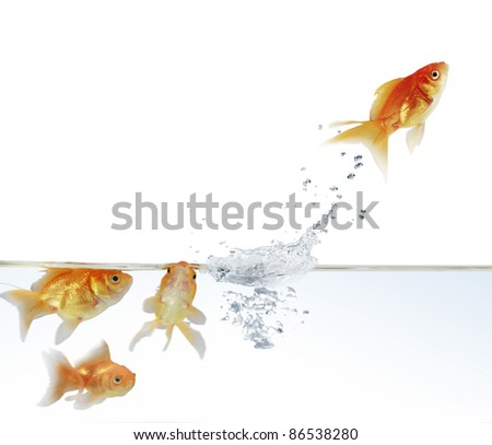 goldfish leaping out of the water