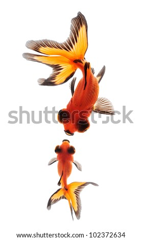 goldfish mother and child concept for mother day