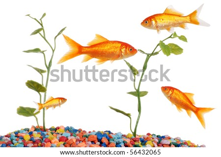 goldfish crackers gilbert. wallpaper about Goldfish