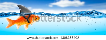 Goldfish With Shark Fin Costume With Blue Sky And Clouds - Brave Ambitious Entrepreneur/ Business Vision Concept	 Foto stock ©