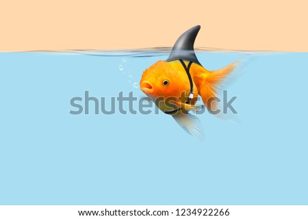 Goldfish with shark fin swim in blue water and cream sky, Gold fish with shark flip . Mixed media