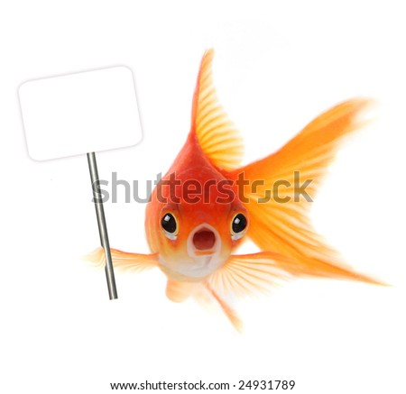 سبزه تنگ ماهی با خاک ژلهای Scared Fish Stock Images, Royalty-Free Images & Vectors Shutterstock