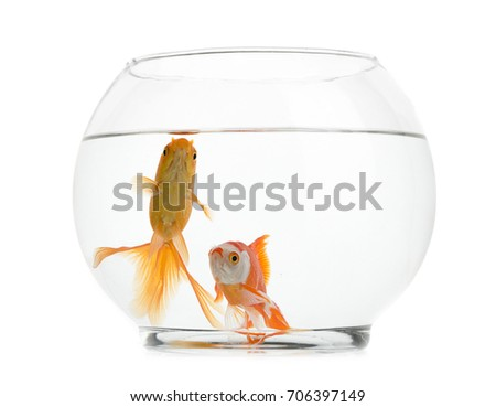 Shutterstock Goldfishes in Fishbowl Isolated