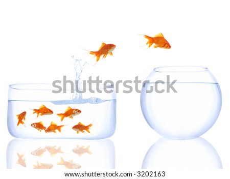 goldfishes waiting their turn to jump to a better place