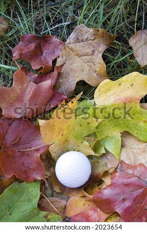 Golf ball among maple leaves in the rough