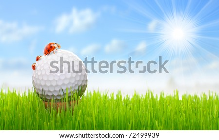 Golf ball and ladybugs - funny picture from golf course.